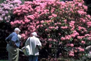 Studying Rhododendrons at Heritage