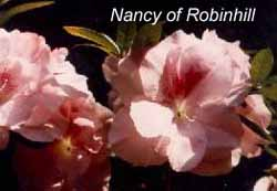 Nancy of Robinhill